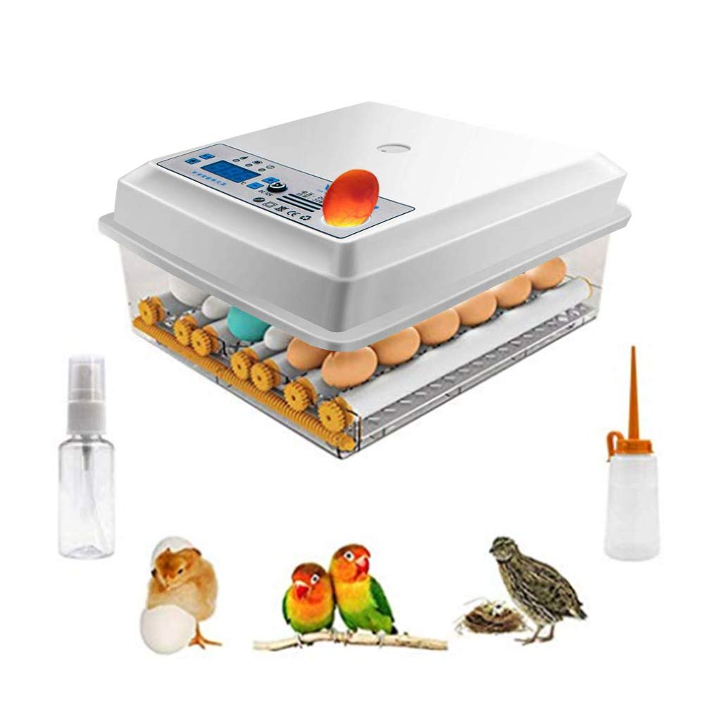 Kacsoo Incubateur doeufs 16 oeufs Mini incubateur automatique num/érique avec retourneur pour l/éclosion des oeufs de poulet de caille de dinde