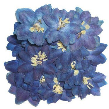 Silver J Pressed flowers, 2 packs. Natural dried blue larkspur. Art & card making - Silver International Daffodil