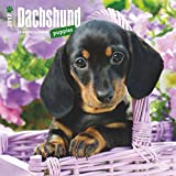 Dachshund Puppies Dogs Wall Calendar 2018 {jg} Best Holiday Gift Ideas - Great for mom, dad, sister, brother, grandparents, , grandchildren, grandma, gay, lgbtq.