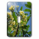 Danita Delimont - Flowers - Indonesia, Island of Lombok. Lingsar Temple. frangipani tree. - Light Switch Covers - single toggle switch (lsp_225748_1)