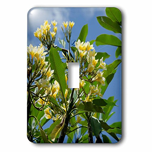 Danita Delimont - Flowers - Indonesia, Island of Lombok. Lingsar Temple. frangipani tree. - Light Switch Covers - single toggle switch (lsp_225748_1) by 3dRose
