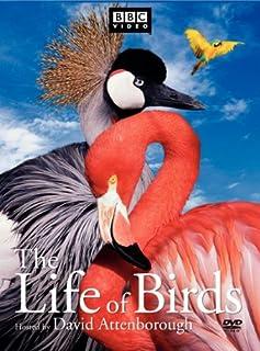 Life of Birds (Full Screen) [3 Discs] (B000069HXL)   Amazon price tracker / tracking, Amazon price history charts, Amazon price watches, Amazon price drop alerts