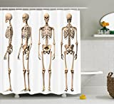 Ambesonne Human Anatomy Shower Curtain, Man Male Human Skeleton Skull Different Perspectives Medical Humor Illustration, Fabric Bathroom Decor Set with Hooks, 70 Inches, Cream
