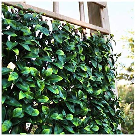 Catral 43040030 Celosía Extensible Laurel, Verde, 150x3x50 cm ...