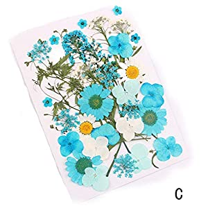 HuaHua-Store Pressed Flower Mixed Organic Natural Dried Flowers DIY Art Floral Decors Collection Gift 46