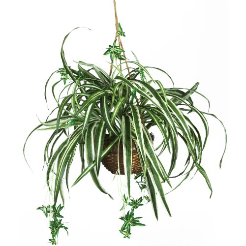 AWM Real Looking Spider Hanging Basket Silk Plant Green Colors - Silk Plant