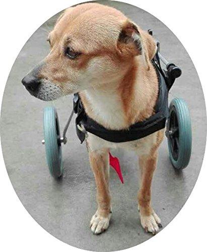 Silla de ruedas ajustable para perro,con altura de la cadera: de 20,32 cm a 66,04 cm, peso de 0 a 45 kg, para perros que tienen rehabilitación en sus patas ...