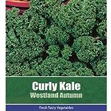 De Ree Curly Kale Westland Autumn Vegetable Plant 150 Seeds