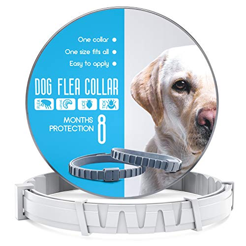 Dog Flea and Tick Control Collar – Treatment and Prevention for Dogs – One Size Fits All – Non-Toxic Waterproof Best Protection and Adjustable – 8 Month Essential Natural Herbal Oil Flea Collar – Gray