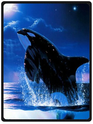 Orca Killer Whales Whale Killer Whales Queen Blanket SumptuouslyソフトPlush Blanket 58