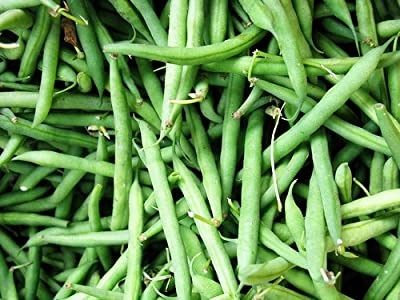 Organic Blue Lake Bush Bean 75 Seeds #0603 Item Upc#650348691943