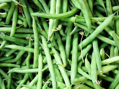 Organic Blue Lake Bush Bean 75 Seeds 0603 Item Upc 650348691943