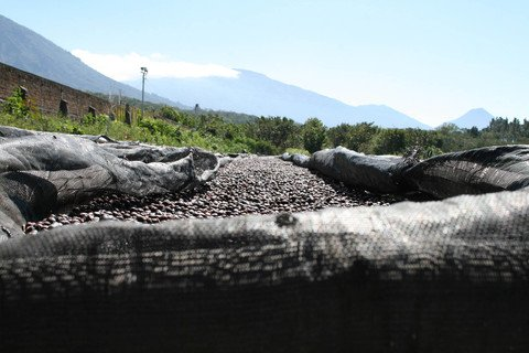 5LB El Salvador Angel Mountain Unroasted Green Coffee Beans