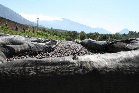 5LB El Salvador Angel Mountain Unroasted Green Coffee Beans