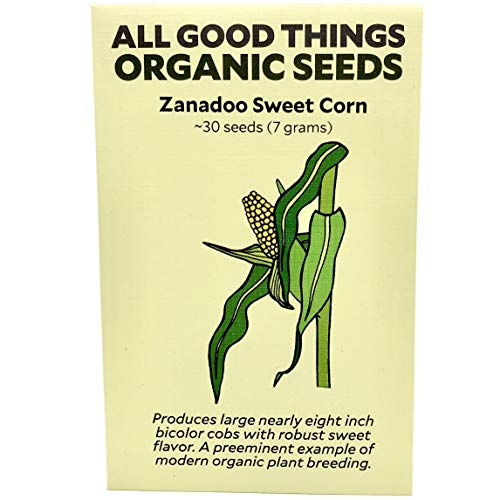 Zanadoo Sweet Corn Seeds (~30): Certified Organic, Non-GMO, Heirloom, Open Pollinated Seeds from The United States (Best Organic Heirloom Seed Catalogs)