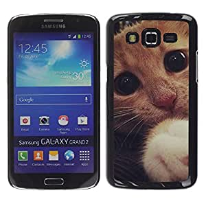 Stuss Case / Funda Carcasa protectora - Cute Sad Frightened Kitten Cat Paw Eyes - Samsung Galaxy Grand 2 SM-G7102 SM-G7105