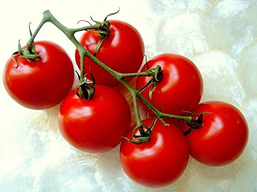 campari-tomato-sweet-vine-tomatoes-exotic-fruit-vegetables-plant-seed-25-seeds