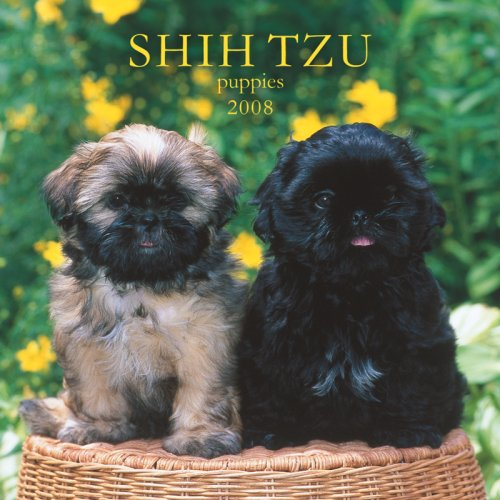 Shih Tzu Puppies 2008 Mini Wall Calendar (German, French, Spanish and English Edition) (Puppies 2008 Calendar)