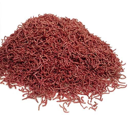 Fish Food Bloodworms (Aquatic Foods Inc. Freeze Dried Bloodworms. Clean Fresh Grade A Bloodworms.1/4-lb)