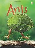 Ants (Beginners)