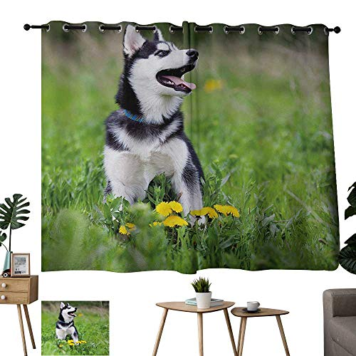 Bensonsve Grommet Blackout Window Curtain Alaskan Malamute Little Puppy Playing on Green Grass Spring Meadow Natural Life Outdoors Multicolor Adjustable Tie Up Shade Rod Pocket Curtain W63 xL72 (Grass Green Pinnacle)