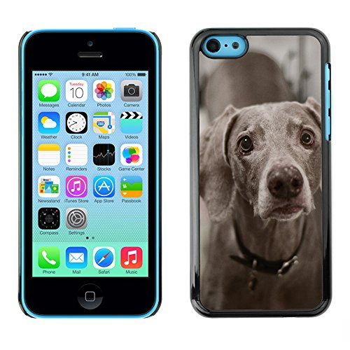 Premio Sottile Slim Cassa Custodia Case Cover Shell // F00009844 chien // Apple iPhone 5C