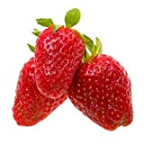 Alexandria Strawberry - 4 Plants - Fragaria