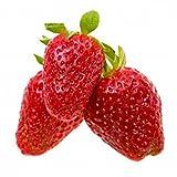 Alexandria Strawberry - 4 Plants - Fragaria