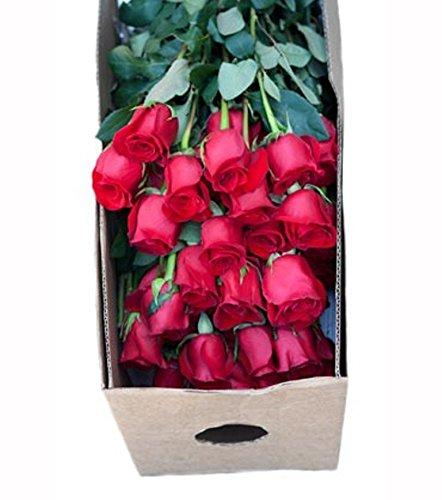 Review Farm2Door Wholesale Roses: 100