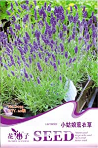 Lavender Seed 20 Purple Beautiful Flower Lovely Healthy Pleasant Popular Plant D035 By Mikedaoer