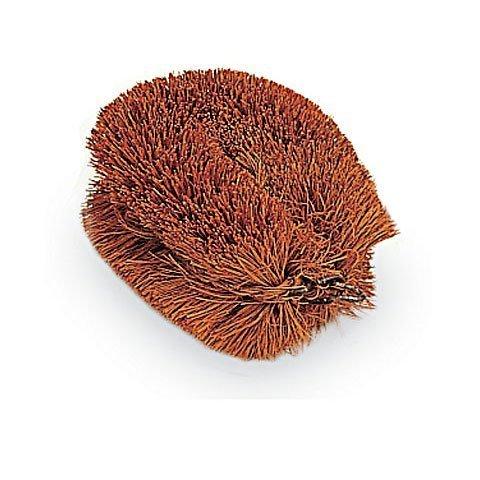 coconut brush - 6