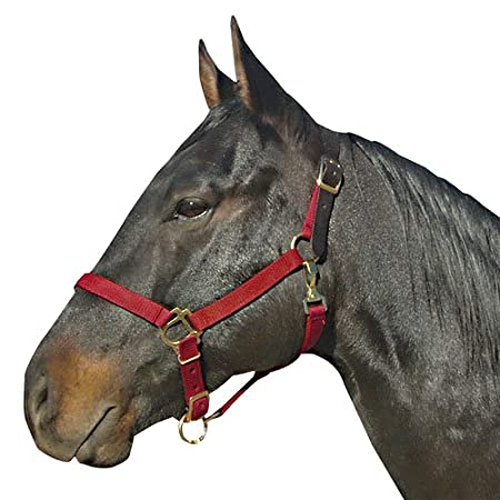 Intrepid International Leather Crown Halter