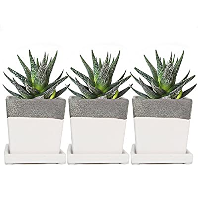 Chive - 3 Piece Set White Square Succulent Cactus Planter Pot, 3 Inch Ceramic Flower Plant Container, Drainage Hole/Saucer, Mini Pot Indoor/Outdoor Garden: Garden & Outdoor
