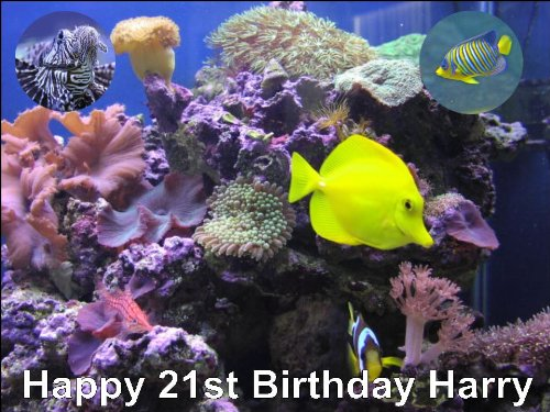 Outstanding A4 Tropical Fish Aquarium Pet Birthday Cake Toppers Decorations Funny Birthday Cards Online Inifodamsfinfo