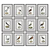 Set of 12 Elegant Water Bird Prints | Sea Shore Wall Art Coastal Beach