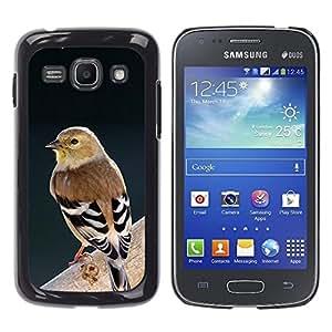 Rama Naturaleza Ornitología Pájaro Primavera- Metal de aluminio y de plástico duro Caja del teléfono - Negro - Samsung Galaxy Ace 3