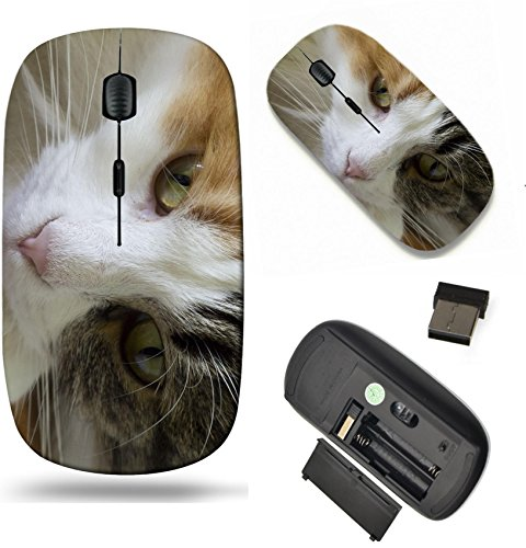 Basking Cat (MSD Wireless Mouse Travel 2.4G Wireless Mice with USB Receiver, Noiseless and Silent Click with 1000 DPI for notebook, pc, laptop, computer, mac book design 20840745 young cat resting basking in the s)