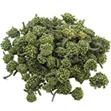 Organic Dry Notoginseng Tien Chi Pseudo-ginseng Flower 500g