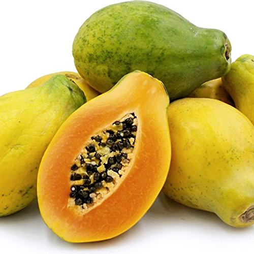 Sunrise Solo Hawaiian Papaya Seeds (Carica papaya) 20+ Non-GMO Fruit Tree Seeds in FROZEN SEED CAPSULES for the Gardener & Rare Seeds Collector - Plant Seeds Now or Save Seeds for Years (Best Time To Plant Papaya Seeds)