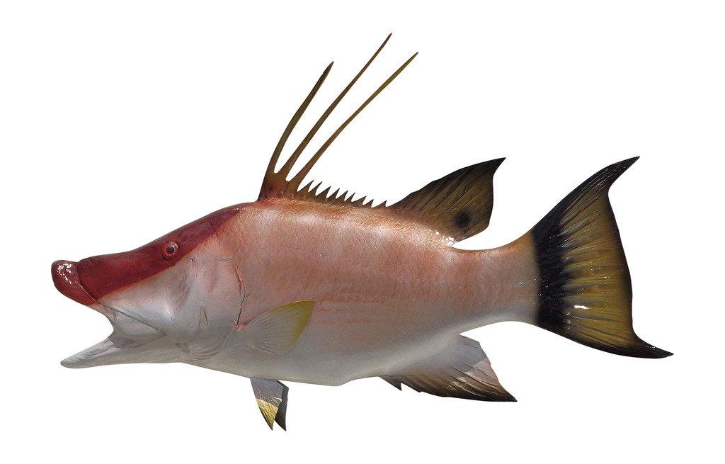 28'' Hog Snapper Half Mount Fish Replica ,Fishing Wall & Coastal Decor
