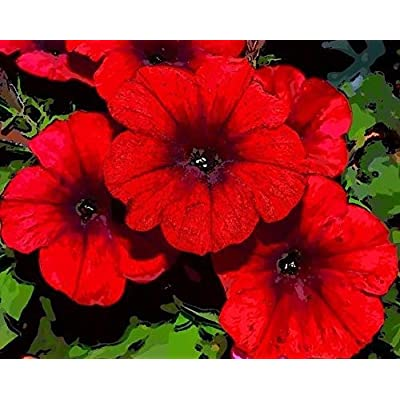 100 Seeds: red Wave Velour Petunia Trailing Cascading Hanging pots planters Bulk Seeds : Garden & Outdoor