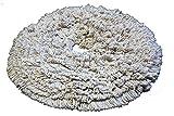 19'' PROCYON Cotton Bonnet Pads - 6 Per Case