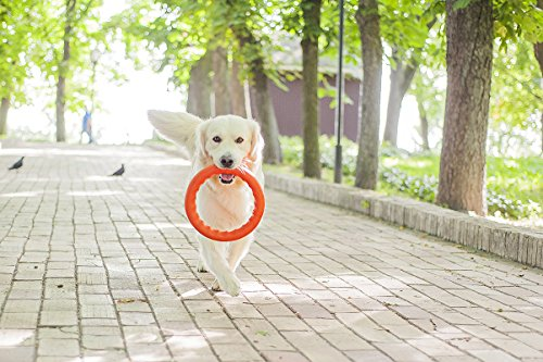 Dog Toys - Dog Training Equipment - Large Dog Toys - Toys for Dogs - Big Dog toys - Fetch Toy - Tough Dog Toys - Dog Tug Toy - Dog Ring Toy - Medium Dog toys - Dog Toy Ring by PitchDog (11, Green) by PitchDog (Image #3)