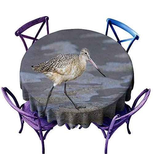 Acelik Spillproof Tablecloth,Marbled Godwit on The Sand at Malibu Lagoon,for Events Party Restaurant Dining Table Cover,40 INCH ()