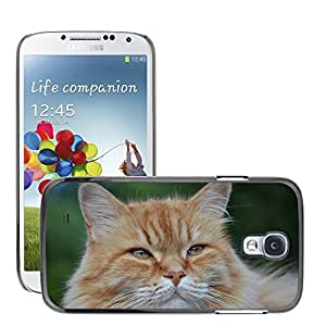 Hot Style Cell Phone PC Hard Case Cover // M00117356 Cat Feline Pet // Samsung Galaxy S4 S IV SIV i9500