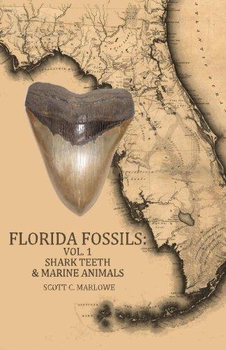 Florida Fossils: Shark Teeth & Marine Animals (Volume 1)