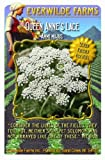 Everwilde Farms - Bishop's Flower Wildflower Seeds - Jumbo Seed Packet (2000)