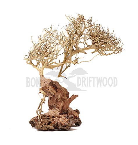 Bonsai Driftwood Aquarium Tree (10 Inch) Natural, Handcrafted Fish Tank Decoration | Helps Balance Water pH Levels, Stabilizes Environments | Easy to Install | BE ()