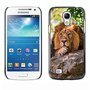 Hot Style Cell Phone PC Hard Case Cover // M00100503 stones lion animals // Samsung Galaxy S4 Mini i9190