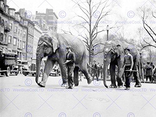 Vintage Circus Photos - 4
